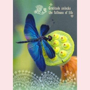 Amber Lotus: Gratitude unlocks the fullness of life