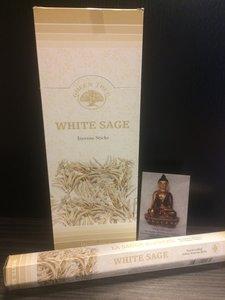 White Sage, witte salie wierook hexagram green tree