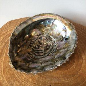 abelone schelp
